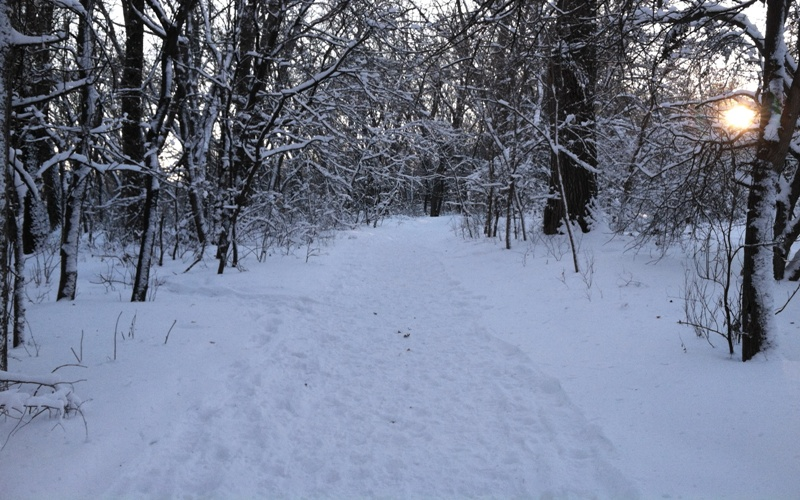Walking through the woods on a snowy evening for web